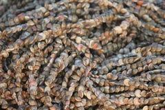 Enorm seende girland av mycket små havsskal Arkivfoton