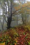 Enorma berg med frostad dimma för dimmig skog som täcker dalen i solbelyst under soluppgång alpin arkivbild