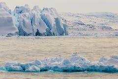 Enorma driva blåa isberg med sammanträdeseagulls på Ilulissat royaltyfri bild