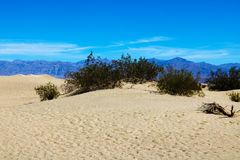 Enorma dyn av öknen Fint ställe för fotografer och handelsresande Härliga strukturer av sandiga barkhans arkivfoton
