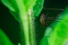 Enorma lockespindlar som döljer i en överkant av en växt arkivfoto