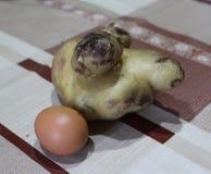 Enorma potatisar och ett ägg royaltyfria foton