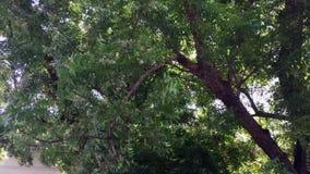 Enorma träd på gatan stock video