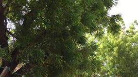 Enorma träd på gatan lager videofilmer