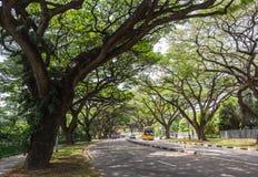 Enorma träd på gatorna Royaltyfria Foton