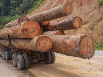 Enorma trädstammar som laddas på att logga lastbilen i regnskogen av Gabon, centrala Afrika Royaltyfri Bild