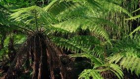 Enorma tropiska ormbunkar i solen arkivfilmer