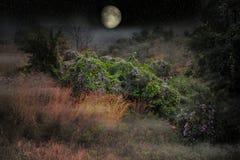Enorma växande månehängningar över djungel royaltyfri bild