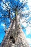 Enorme Ausbreitung des bloßen Baums von trockenen toten Blättern lizenzfreie stockfotos
