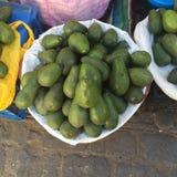 Enorme Avocados Stockfotografie