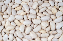 Enorme-blanc-haricots Photographie stock libre de droits