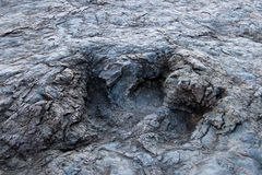 Enorme Dinosaurierabdrücke, Maragua, Bolivien Lizenzfreie Stockfotos