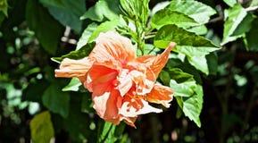 Enorme helle Blume lizenzfreie stockfotografie