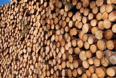 Enorme houten stapel. Ontbossing. royalty-vrije stock foto