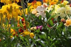 Enorme kleurrijke inzameling van bloemen stock fotografie