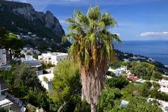 Enorme Palme auf der Insel von Capri. Lizenzfreies Stockfoto