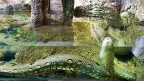 Enorme Schlange im Wasser lizenzfreie stockfotografie