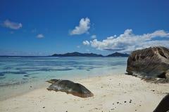Enorme Steine auf dem Strand Stockfoto