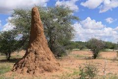 Enorme Wohnung für Termiten stockfotos