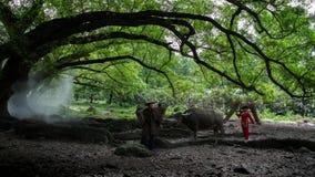 Enormer Banian in Xiapu, China stockfoto