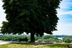 Enormer Baum in Belgrad Serbien nahe altem Schloss Stockfotografie