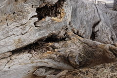 enormes altes Holz Stockfoto