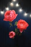 Enormes Wachstumsrosa blüht im Innenraum auf dem Hintergrund der blauen Wand mit Retro- Girlande Stockfotografie