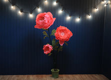 Enormes Wachstumsrosa blüht im Innenraum auf dem Hintergrund der blauen Wand mit Retro- Girlande Lizenzfreies Stockfoto