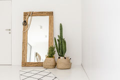 Enormous mirror in the room. Enormous mirror accompanied by plants in the living room Royalty Free Stock Photos