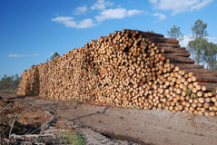 Enormous wood stack. Deforestation. Stock Photos