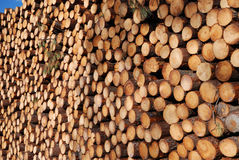 Enormous wood stack. Deforestation. Many cuts of sawed logs form woodstack background. Focus is on the rightmost logs. Woodpile recedes into the distance Royalty Free Stock Photo