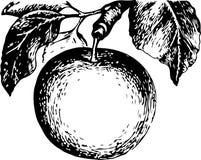 Enormt och läckert äpple som hänger på en filial royaltyfri illustrationer