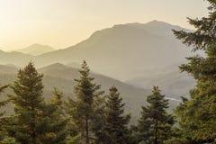 Enormt sörjer med kottar växer i bergnärbilden i strålarna av regionen Tzoumerka, Grekland, berg Pindos för inställningssolen royaltyfria foton