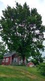 Enormt träd överst av en kulle Arkivfoton