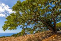 Enormt träd på kustlinjen Royaltyfri Fotografi