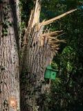 Enormt träd som är brutet efter storm Arkivfoto