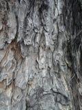 Enormt trädträskäll arkivfoton