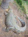 Enormt vila för krokodil Royaltyfria Foton