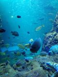 Enoshima Overzees Aquarium royalty-vrije stock afbeeldingen