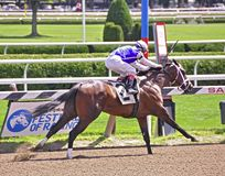 Saratoga Racing Photos- Enquette royalty free stock images