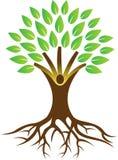 Enraíze a árvore Fotos de Stock Royalty Free