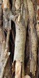 Enraíze a árvore Fotos de Stock