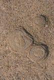 Enracine des taxodiums photo libre de droits