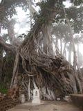 enracine l'arbre image libre de droits