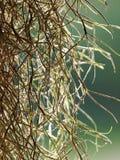 Enracine la plante en pot accrochant dans le ciel Image stock