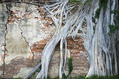 Enracinez l'arbre Image libre de droits