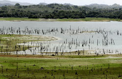 Enraivecer o lago, Panamá Fotos de Stock