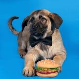 Enrarezca el perrito amarillo en la corbata de lazo que miente en azul Imagen de archivo
