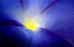 Enredadera azul. Fotos de archivo