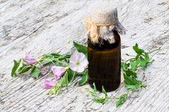 Enredadera de campo (arvensis de la enredadera) y botella farmacéutica Foto de archivo